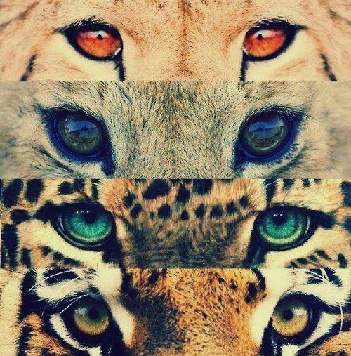 Habiller nos yeux avec les bonnes couleurs !