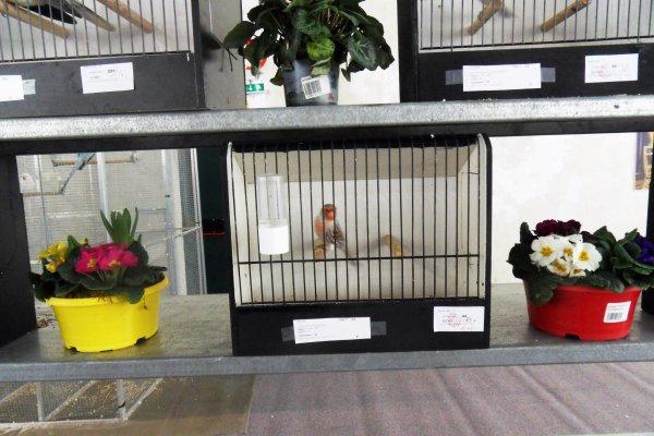 résultats concours festival oiseaux de Sérifontaine
