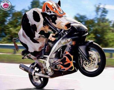 Un fidèle lecteur de Moto Journal raconte son Hivernale en images !  Moto