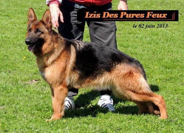 www.chenildespuresfeux.be