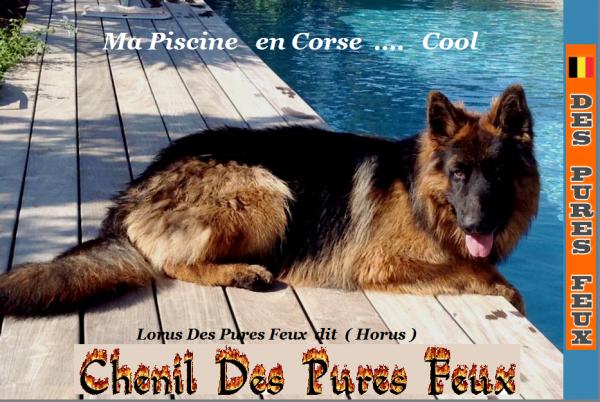www.chenildespuresfeux.be www.chenildespuresfeux.com