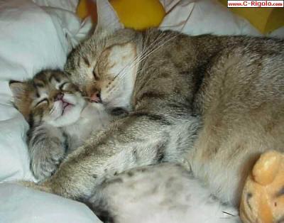 deux chats qui dorment ensemble