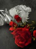 Photo de x--Rose-Blanche--x