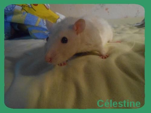 ●Pr�sentation de C�lestine●