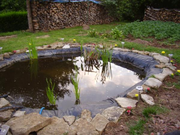 Bassin pour les poissons le jour cr ations de toutes sortes - Bassin rond pour poisson nimes ...