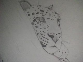 Dessin fait par moi animaux r alistes blog de - Dessin d animaux facile a reproduire ...