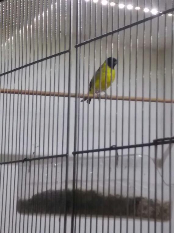 De beaux  oiseaux