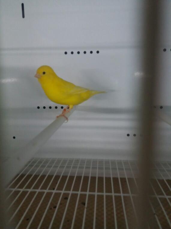 Quelques jeunes  en jaune