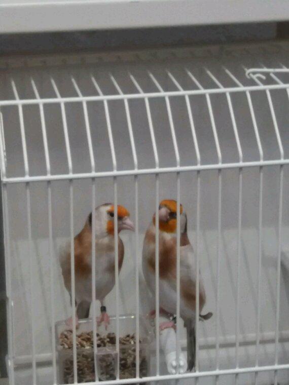 La suite de beau oiseaux