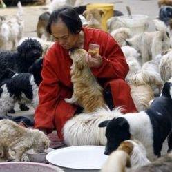 Un chinois prend soin de 140 chiens errants par amour