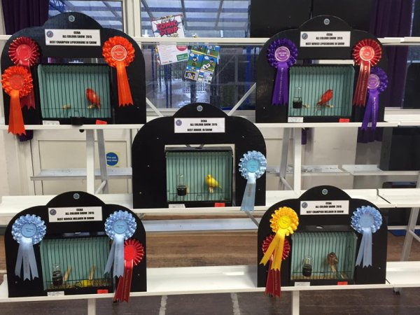 All Colour Show 2015 - Main Winners