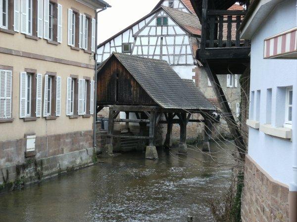 Randonn�e � Woerth (Alsace) 2016.