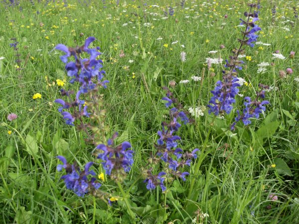 Fleurs sauvages - Partie 1.