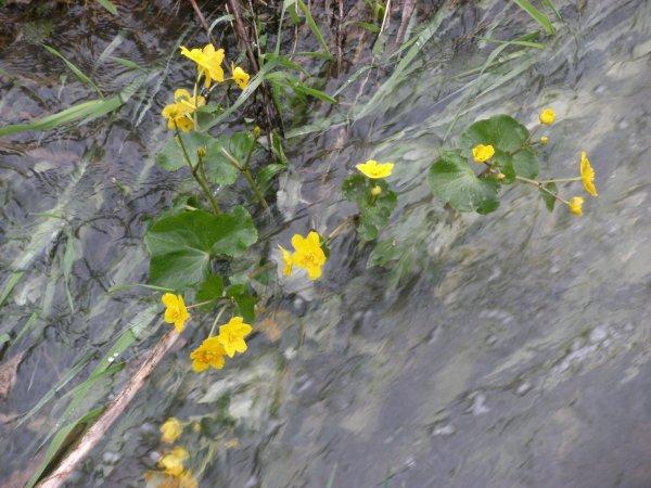 Fleurs sauvages - Partie 2.
