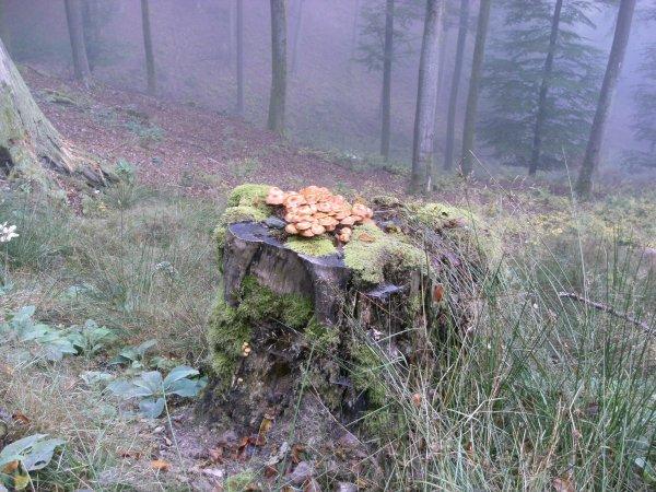 Randonnée à Baerenthal - 2016.