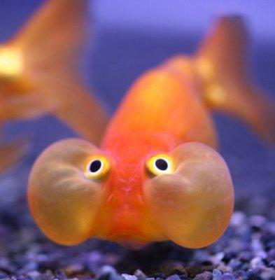 Petit poisson blog de kylian vs kiki 75 for Poisson de petit aquarium