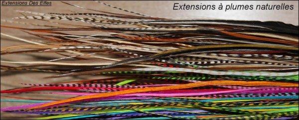 Les Extensions � Plumes qualit� 100% naturelle