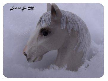 ▪ Bievenue aux Ecuries Du CSO ! Un C-E rempli de chevaux et poneys, pour le bonheur de tout cavaliers ! ▪