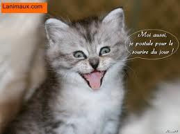 Hi hi hi trop marrant le chat xd blog de maureenanimal - Chaton marrant ...