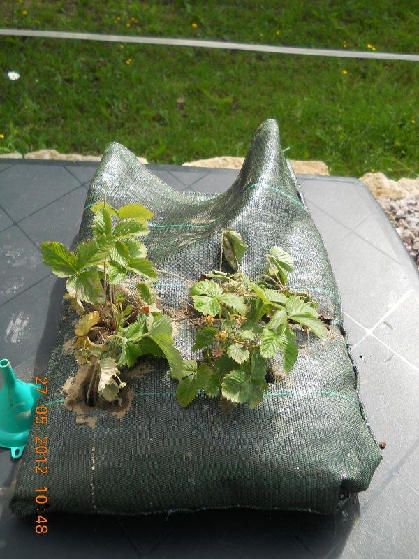 jardinage 1!!