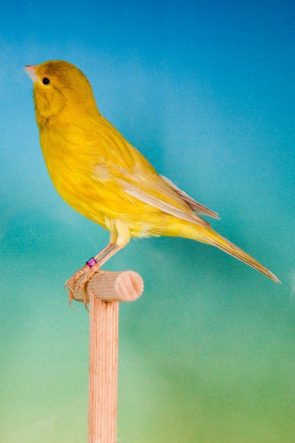 Bruinpastel geel intensief 2015 ptn. 91