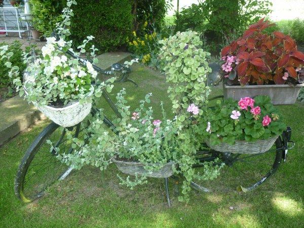Balade au jardin (suite)