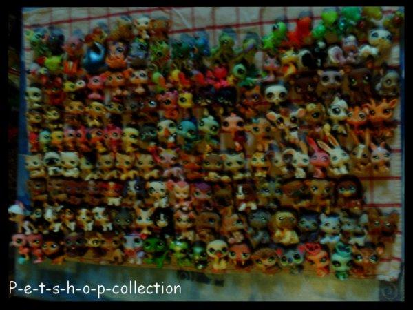 Pet shop blog de p e t s h o p collection - Petshop singe ...