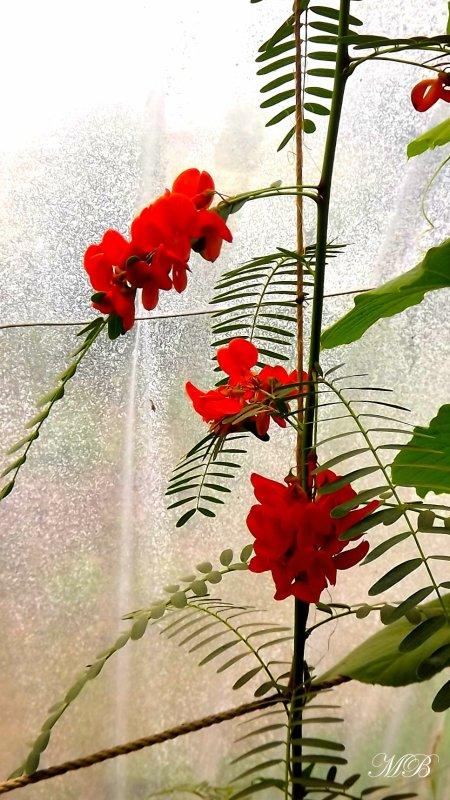 """Floral"" #261"