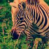AnimalCrossing-Passion
