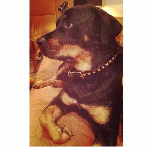Le chien de Bruno mars
