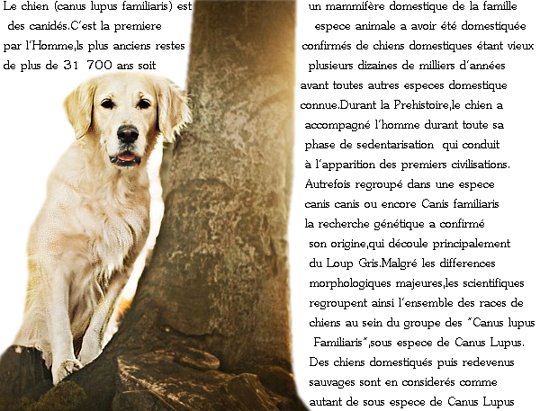 7�me Article.
