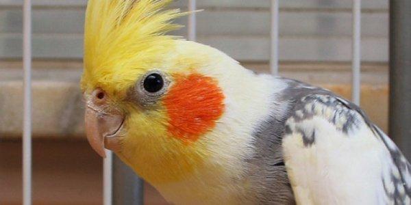blog de faucon13 l 39 oiseau a l 39 tat sauvage ou