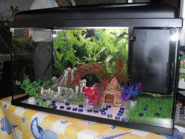 Blog de mes poissons tropicaux blog de mes poissons for Poisson tropicaux pour aquarium