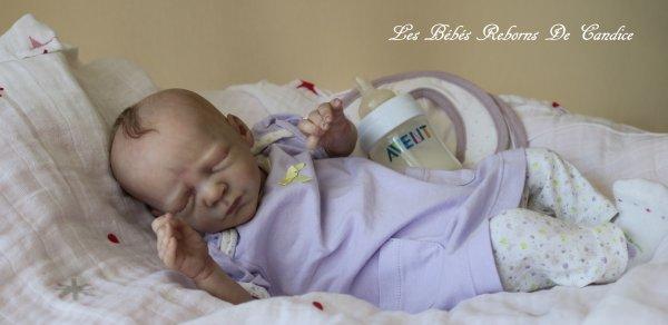 Alizée (disponible à l'adoption )