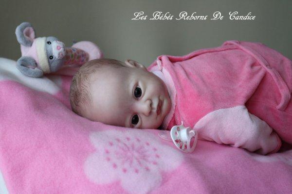 Juliette (disponible à l'adoption)