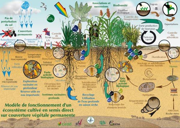 Pierre Rabhi : L'agroécologie