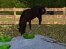 Photo de christi-sims3-chevaux