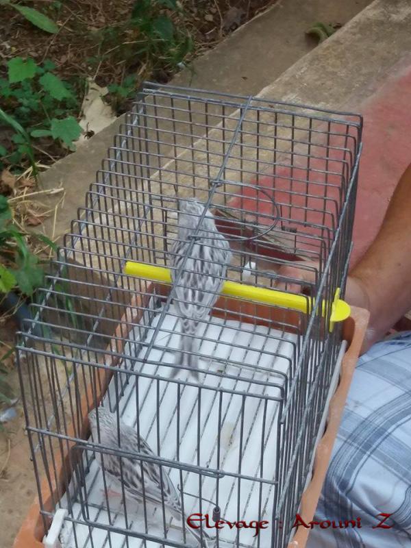 femelle agate topaze blanc
