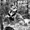 TheSarcecyans-F-Kimbo