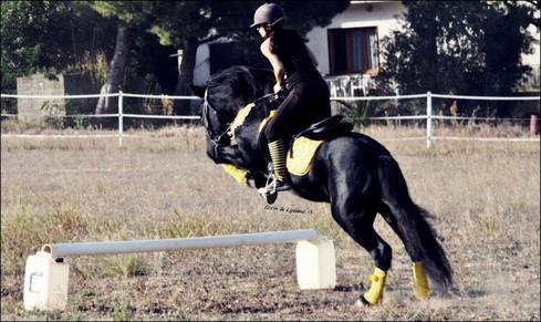 Un cheval peut il souter plus haut que sa hauteur les chevaux ma passion - Frison qui saute ...