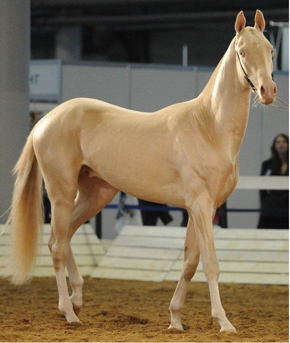 Il parait que c 39 est le plus beau cheval du monde les - Le plus beau canape du monde ...