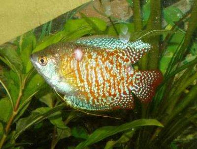 maladies des poissons d aquarium d eau douce 224 quoi sont elles dues de aquarium6259