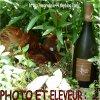Poule-soie et produits r�gionaux