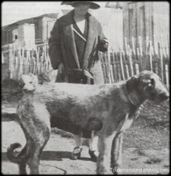 Le caniche de madame Heir Session 1 : Apparition Photographique Lieu : Irlande Ann�e :  1926 Type : Amateur