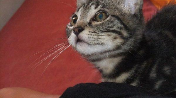 On ne choisit jamais un chat, c'es lui qui vous choisit .