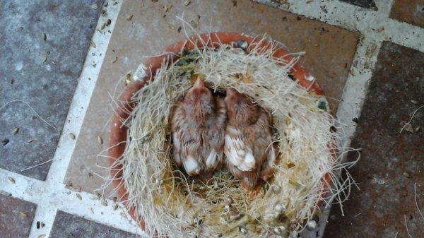 Les 5 purs ont bien changer s�parer en deux nids un de 3 les plus gros et 2 les plus petits