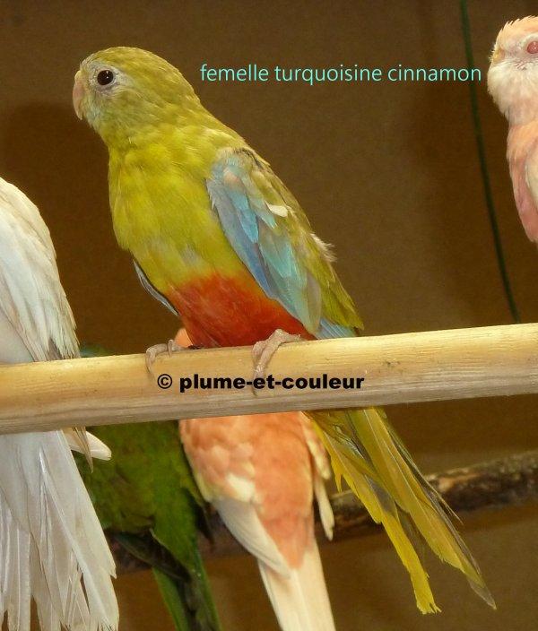 """quelques jeunes de 2013 sélectionnés pour ma """"collection de plumes"""""""
