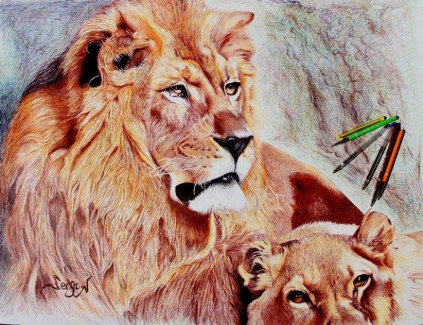 Lions au stylo bille