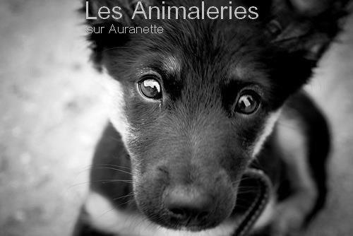 Les animaleries