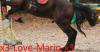 x3-Love-Mario-x3